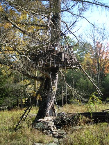 treehouse4.jpg