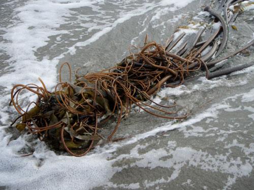 kelpball1.jpg