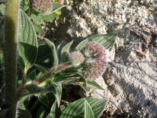 wildflower11.jpg
