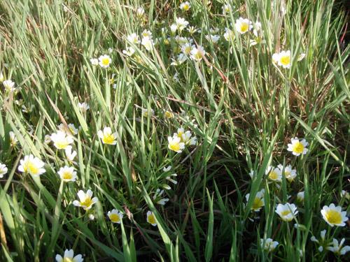 wildflower13.jpg