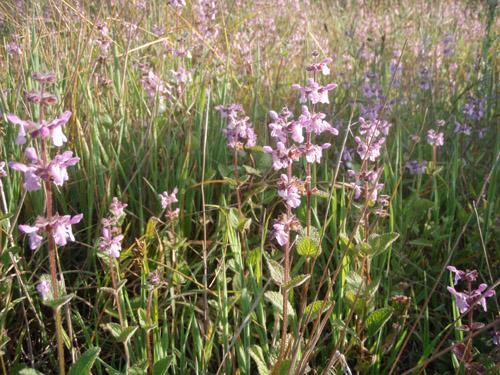 wildflower9.jpg