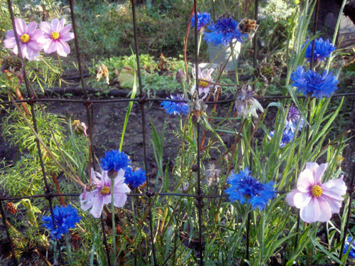 fence flowers2