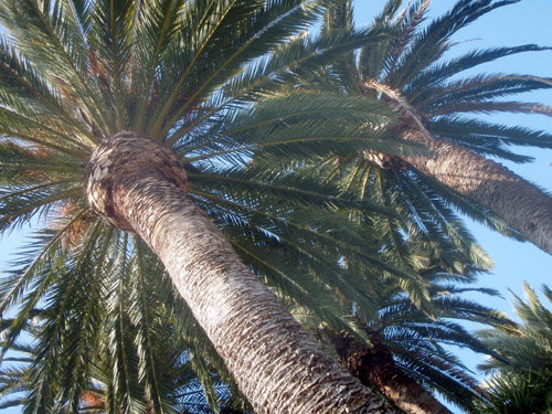 sunnyside palms