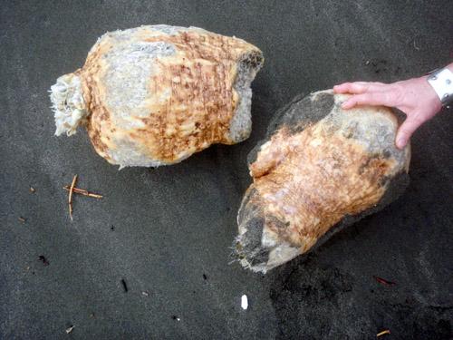 beach tubers