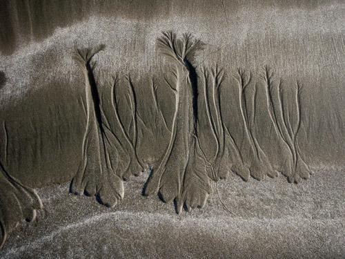 sand trees3