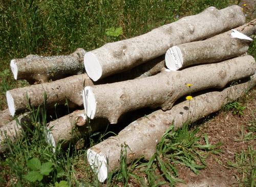holly logs
