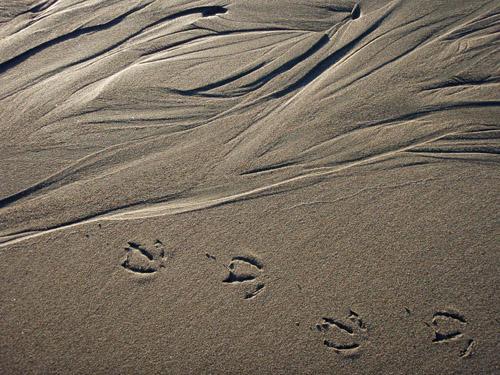 sand pattern16