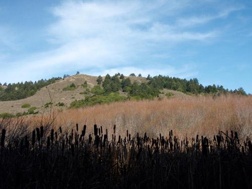 willow creek hills