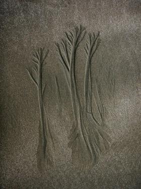 sand tree5
