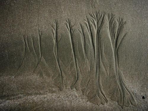 sand tree7