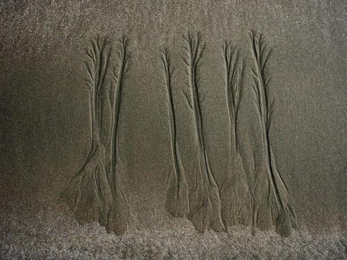 sand tree8