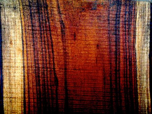 acacia grain