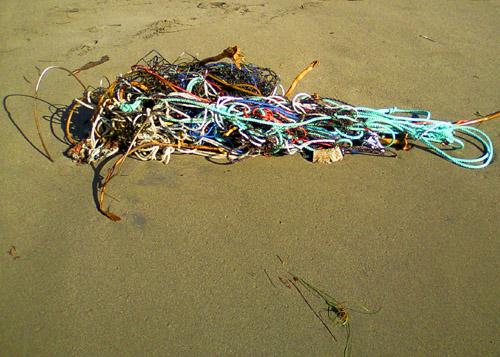 beach tangle